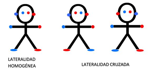 lateralidad-x-cruzada-cadiz